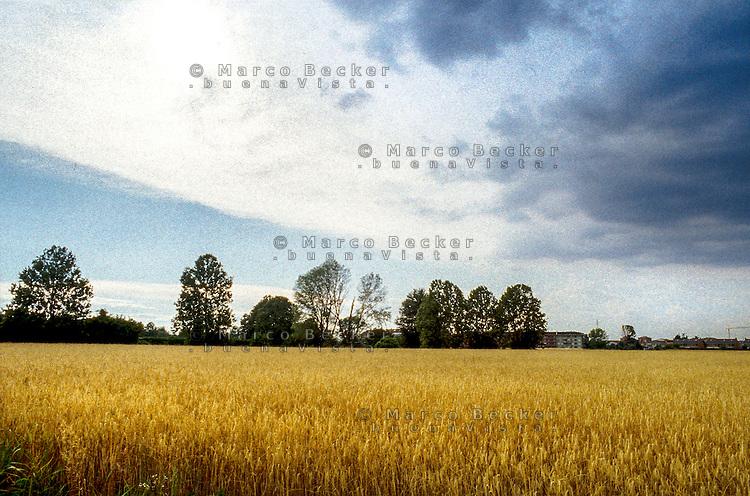 Un campo di grano a Cassina Nuova frazione di Bollate, a nord di Milano --- A field of wheat in Cassina Nuova, small village of Bollate north of Milan
