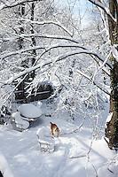 Snow in Charlottesville, VA.