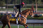OCT 27 2014:V.E.Day, trained by Jimmy Jerkens, exercises in preparation for the Breeders' Cup Classic at Santa Anita Race Course in Arcadia, California on October 27, 2014. Kazushi Ishida/ESW/CSM