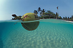 Coconut floating split level