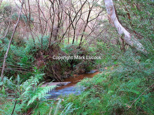 Jamison Creek, Blue Mountains, NSW