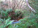 Jamison Creek, Blue Mountains, NSW