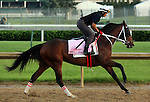 LOUISVILLE, KY - MAY 02:  Paola Queen (Flatter x Kadira, by Kafwain) gallops at Churchill Downs, Louisville KY, in preparation for the Kentucky Oaks. Owner Grupo 7C Racing Stable, trainer Gustavo Delgado. (Photo by Mary M. Meek/Eclipse Sportswire/Getty Images)