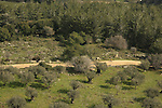Israel, Mount Carmel, view of Carmel Scenic road and an Olive grove from the Muhraka