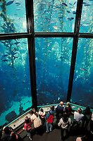 KELP TANK AT THE MONTEREY BAY AQUARIUM. AQUARIUM GOERS. MONTEREY CALIFORNIA USA.