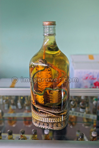 Asia, Vietnam, Cu Chi nr. Ho Chi Minh City (Saigon). Cu Chi Tunnels. Snake wine for sale in the tourist shop. Snake wine is an alcoholic beverage produced by infusing whole snakes in rice wine or grain alcohol. The drink can be found in China, Vietnam and throughout Southeast Asia.