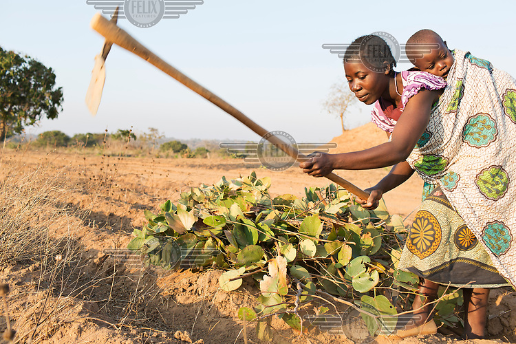 Nancy Kumuwenda (30) hoeing farm land with her son Patrick bound to her back.