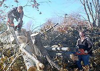 Marc Hayot/Herald Leader Workers from Christian Aid Ministries cut down one of the fallen trees ion Edgewood Circle.