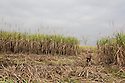 """Cambodia - Kampong Speu Province - Chei Reoun, 35, working in the sugarcane plantation. In 2010, she stripped of their land. Chei was forced to accept a compensation of 70,000 riel (around 17 USD) for 1,5 hectares of land, after the commune chief warned her that the company would have taken her land with or without her consent. """"With the plantation, they told us that the work would have knocked at our door. It is true, but the work is just about sweating and cutting all day long"""" she complains. While Chei is still able to pay for the school fees of her three children, she is growing worried about their future. """"Without land, they will grow poorer and poorer"""" she says."""
