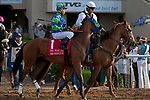 """DEL MAR, CA  AUGUST 18: #5 Accelerate, ridden by Joel Rosario, in the post parade of the $1 Million TVG Pacific Classic (Grade l) """"Win and You're in Classic Division"""" on August 18, 2018 at Del Mar Thoroughbred Club in Del Mar, CA.(Photo by Casey Phillips/Eclipse Sportswire/Getty ImagesGetty Images"""
