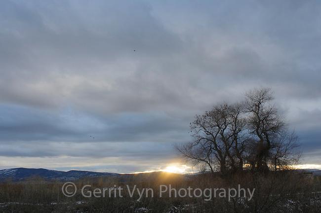 Wilow at sunset. Lower Klamath National Wildlife Refuge, Siskiyou County, California. December.