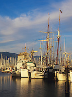 Fishing boats and the tall ship Californian in back ground docked in Santa Barbara harbor