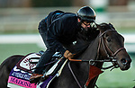 October 31, 2020: Madone, trained by trainer Simon Callaghan, exercises in preparation for the Breeders' Cup Juvenile Fillies Turf at at Keeneland Racetrack in Lexington, Kentucky on October 31, 2020. Alex Evers/Eclipse Sportswire/Breeders Cup
