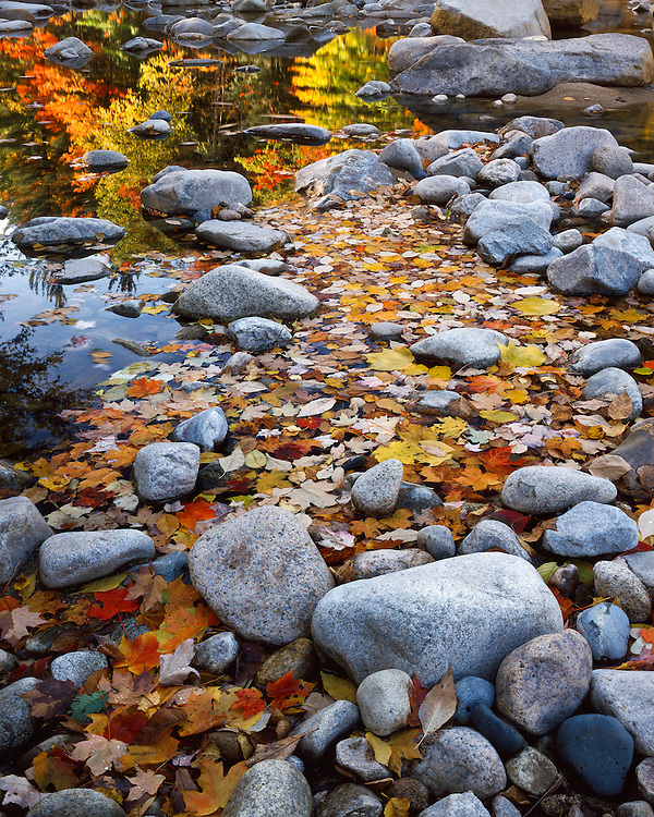 Fall color along the Swift River; White Mountains National Forest, NH