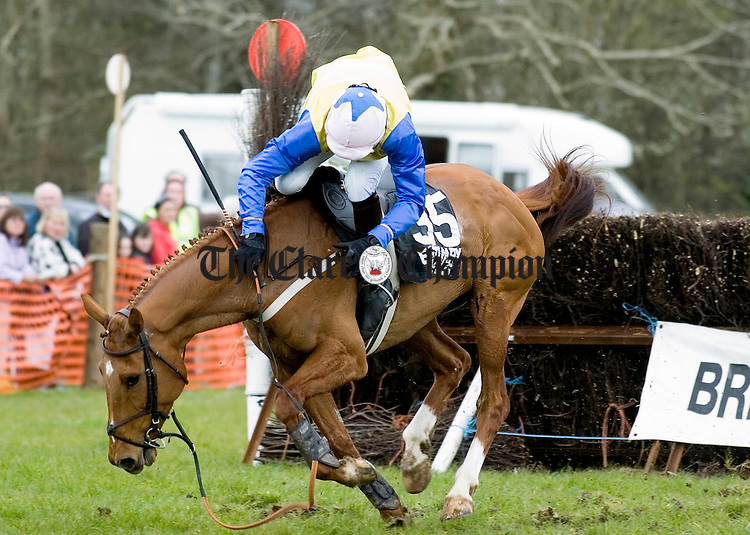 Golden Gem loses his mount JF Bennett during the second race at  the Dromoland Point to point.Pic Arthur Ellis.