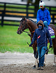 October 30, 2020: Raging Bull, trained by trainer Chad C. Brown, exercises in preparation for the Breeders' Cup Mile at Keeneland Racetrack in Lexington, Kentucky on October 30, 2020. Alex Evers/Eclipse Sportswire/Breeders Cup