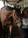 May18, 2015  American Pharoah returned to Churchill Downs following his win in the Preakness Stakes  (shown with Dana Barnes, an exercise rider.)  He will prepare for the Belmont Stakes in New York on June 6. Owner Zayat Stables, trainer Bob Baffert. By Pioneerof The Nile x Littleprincessemma (Yankee Gentleman.) ©Mary M. Meek/ESW/CSM