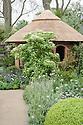 Cornus kousa 'China Girl', The M&G Centenary Garden – 'Windows through Time' - a celebration of 100 years of Chelsea garden design, designed by Roger Platts, Gold medal winner, RHS Chelsea Flower Show 2013.
