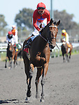 June 18, 2011.Sugarinthemorning ridden by Patrick Valenzzuela heading for the winners circle after winning the Manhattan Beach Stakes at Hollywood Park, Inglewood, CA.