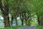 Europa, DEU, Deutschland, Nordrhein Westfalen, NRW, Bergisches Land, Oberbergisches Land, Nuembrecht, Allee, Baeume, Baumallee, Weg, Strasse, Kategorien und Themen, Natur, Umwelt, Landschaft, Jahreszeiten, Stimmungen, Landschaftsfotografie, Landschaften, Landschaftsphoto, Landschaftsphotographie, <br /> <br /> [Fuer die Nutzung gelten die jeweils gueltigen Allgemeinen Liefer-und Geschaeftsbedingungen. Nutzung nur gegen Verwendungsmeldung und Nachweis. Download der AGB unter http://www.image-box.com oder werden auf Anfrage zugesendet. Freigabe ist vorher erforderlich. Jede Nutzung des Fotos ist honorarpflichtig gemaess derzeit gueltiger MFM Liste - Kontakt, Uwe Schmid-Fotografie, Duisburg, Tel. (+49).2065.677997, archiv@image-box.com, www.image-box.com]