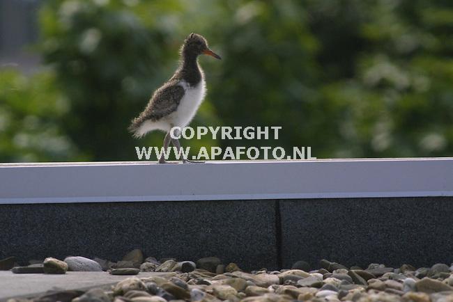Arnhem, 130601.<br /> Eksternest.<br /> Foto: Sjef Prins/APA foto.