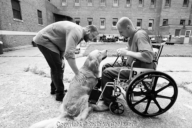 BEACON, NEW YORK:  Instructor Carl Rothe (L) and Andy train Rezzie to get him used to working with someone in a wheelchair during class for the Puppies Behind Bars program at Fishkill Correctional Facility. Andy says Rezzie has a natural way with him and knows when someone can't do something for himself. The training program prepares puppies to be service dogs and consists of one day of class a week on topics such as obedience training, grooming, basic care of the dogs. The rest of the week prisoners keep the dogs with them as they go about their daily routine in the prison.