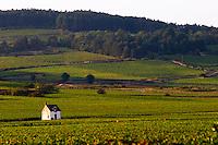 vineyard hut vineyard beaune cote de beaune burgundy france