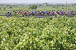 The peloton during Stage 6 of La Vuelta d'Espana 2021, running 158.3km from Requena to Alto de la Montaña Cullera, Spain. 19th August 2021.    <br /> Picture: Charly Lopez/Unipublic   Cyclefile<br /> <br /> All photos usage must carry mandatory copyright credit (© Cyclefile   Unipublic/Charly Lopez)