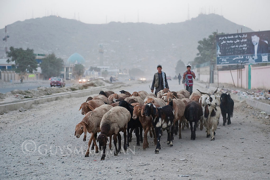 Kabul street scene. 7-9-10 Boys herd goats down the Darulamen Road.