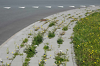 Nederland - Zaandam - 2020 . Vrolijk onkruid tussen stoeptegels op een bedrijventerrein.  Foto ANP / Hollandse Hoogte / Berlinda van Dam