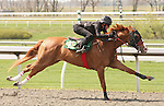 07 April 2011.  Hip #45 More Than Ready - Power of the Pad filly consigned by Eddie Woods.