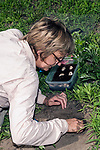Turtle biologist, Julie Lisk with Zoo New England carefully excavates out Wood turtle nest searching for fertilized eggs.  She uses various size paint brushes when she locates eggs as to not chance damaging the unborn turtle. Vertical