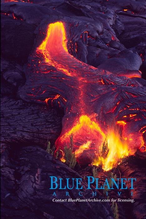 Small flow of lava and ferns, Hawaii Volcanoes National Park, Big Island, Hawaii, USA