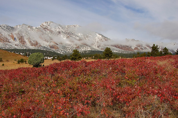 Sumac foliage and Flatirons rock formation in autumn snow, Boulder.<br />