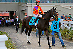 February 21, 2015: Harbour Island with Miguel Mena up in the Rachel Alexandra Stakes at the New Orleans Fairgrounds Risen Star Stakes Day. Steve Dalmado/ESW/CSM