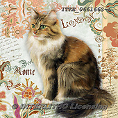 Isabella, REALISTIC ANIMALS, REALISTISCHE TIERE, ANIMALES REALISTICOS, paintings+++++,ITKE066166S-L,#a#, EVERYDAY ,cats ,collage