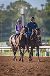 """September 26, 2015: Bayern in the post parade for the Breeders' Cup """"Win and You're In"""" Awesome Again Stakes at Santa Anita Park in Arcadia, California. Zoe Metz/ESW/CSM"""