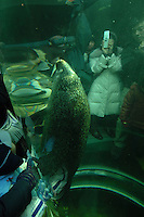 Sea-lions swim through a tube and are watched by Japanese spectators at Asahiyama Zoo in freezing Hokkaido prefecture in northern Japan. The  visitor numbers have increased ten fold to 3 million in the past few years since the introdution of the parade and other interactive facilities. Only Ueno Zoo in Central Tokyo has  more visitors.