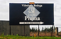 Sign showing the way to Vinedos y Bodega Duilio Piuma 20 meters to the right Uruguay, South America
