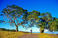 A mountain biker rides under a canopy of old trees on a trail on Mauna Kea on the Big Island of Hawaii