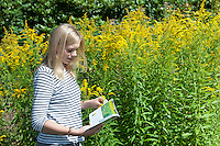 Pflanzen-Bestimmung, Pflanzenbestimmung, Mädchen, Jugendliche bestimmt mit einem Naturführer eine Pflanze, Botanik, Exkursion, Kanadische Goldrute, Goldrute, Solidago canadensis, Girl, youngsters determines a plant, botany, excursion with a natural leader, Canada golden-rod, golden-rod, Canada goldenrod
