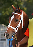 10 October 2009: Discreetly Mine before the Champagne Stakes at Belmont Park in Elmont NY.
