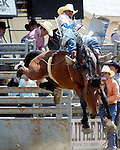 Pueblo, Colorado cowboy Cassie Colletti gets wild and western on a Cervi Championship Rodeo Company bareback bronc during the annual Father's Day PRCA Rodeo June 15, 2008 in Evergreen, Colorado. Cassie was awarded 78 point ride for his efforts.