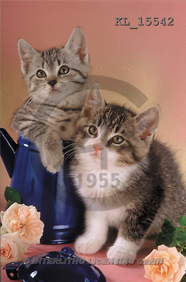 Interlitho, Alberto, ANIMALS, cats, photos, 2 cats, can, roses(KL15542,#A#) Katzen, gatos