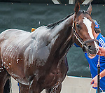Bodemeister gets a bath after morning workouts at Churchill Downs in Louisville, Kentucky on May 1, 2012.
