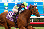 """DEL MAR, CA. AUGUST 26: Gary Stevens on #10 Giant Expectations begins celebrating as they pull away from the field in the  Pat O'Brien Stakes (Grade ll), Breeders' Cup """"Win and You're in Dirt Mile Division"""" on August 26, 2017, at Del Mar Thoroughbred Club in Del Mar, CA.(Photo by Casey Phillips/Eclipse Sportswire/Getty )"""