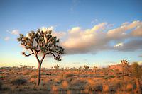 Joshua Tree Dreams - Joshua Tree National Park, CA
