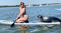 BNPS.co.uk (01202 558833)<br /> Pic: Rachael Towers/BNPS<br /> <br /> A 'showboating' seal gave two paddleboarders the experience of a lifetime when he decided to sunbathe on their boards and even pose for a selfie.<br /> <br /> Rachael Towers said she was afraid and tried to steer clear of the young seal but it made a bee-line for her board.<br /> <br /> Initially she was terrified it was going to pop her inflatable paddle board with its sharp nails or scratch her.<br /> <br /> But after half an hour floating around together, the pair were firm friends.