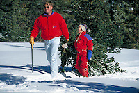 Cutting a Christmas Tree and Pulling it Through the Snow with Dad, Father, Winter, Boy, Family, Holiday. Father and Son , Colorado, United States, Rocky Mountains, Summit County