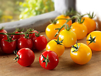 Red and Yellow Tomatoes on the vine